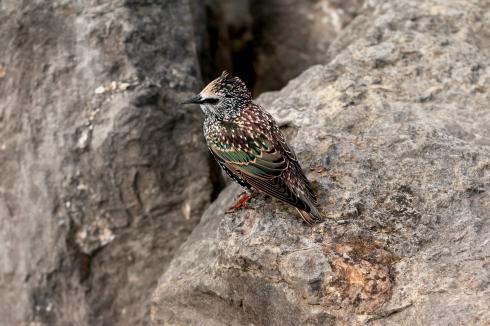 Bird at Morecambe