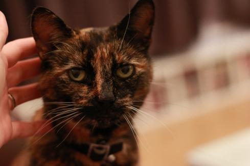 Calverley Cat
